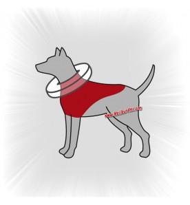 Collerette de protection pour chien