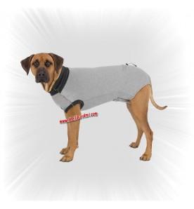Body de protection pst opération pour chien