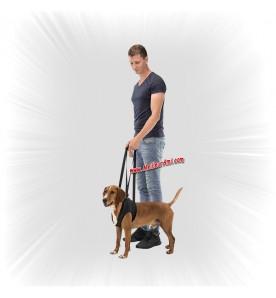 Aide à la marche chien