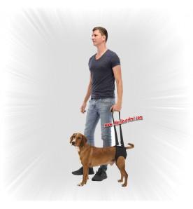 Outil d'aide à la marche pour chien
