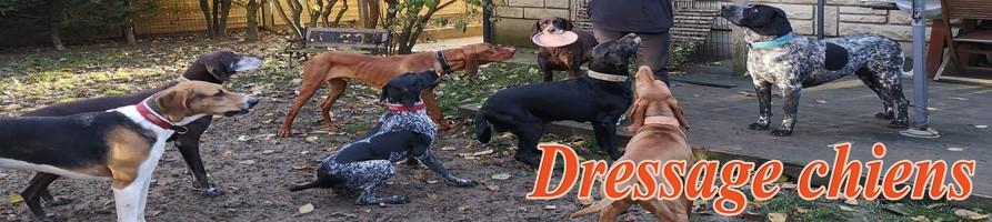 Dressage chiens